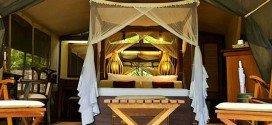 Kenya Eco lodge vacanze safari