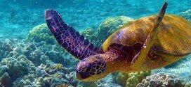 Galapagos viaggio 2012
