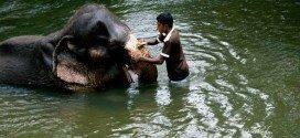 Sri Lanka tour orfanotrofio degli elefanti