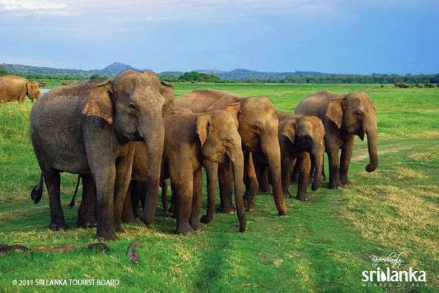 Sri Lanka tour orfanotrofio elefanti