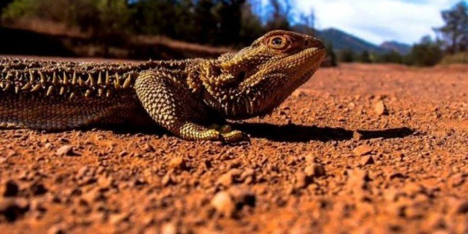 Tour South Australia Flinders Rangers