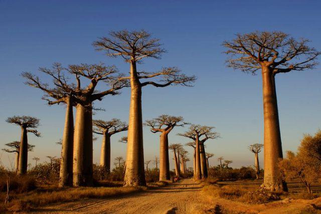 Vacanze Madagascar hotel
