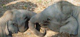 India safari e tour elefante
