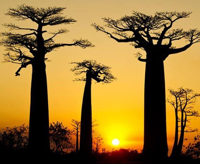 Madagascar viaggio
