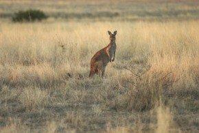 South Australia: tre destinazioni non turistiche