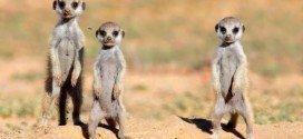 Safari in Sudafrica guida completa: consigli per vedere i Big Five