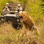 Safari fotografico