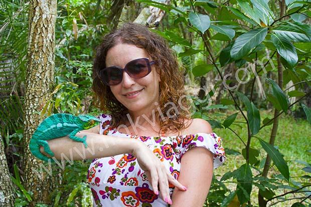 camaleonte Madagascar Francesca Spanò