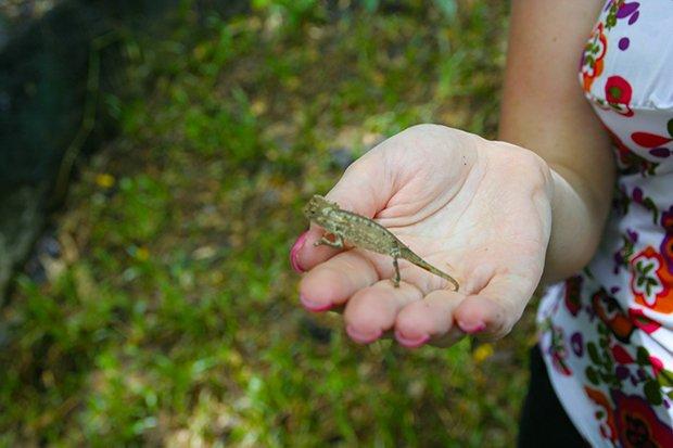 piccolo camaleonte