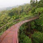 Kirstenbosch Centenary Tree Canopy Walk photo Adam Harrower