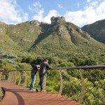 Kirstenbosch Centenary Tree Canopy Walk