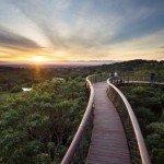 Kirstenbosch Centenary Tree Canopy Walk photo Adam Harrower