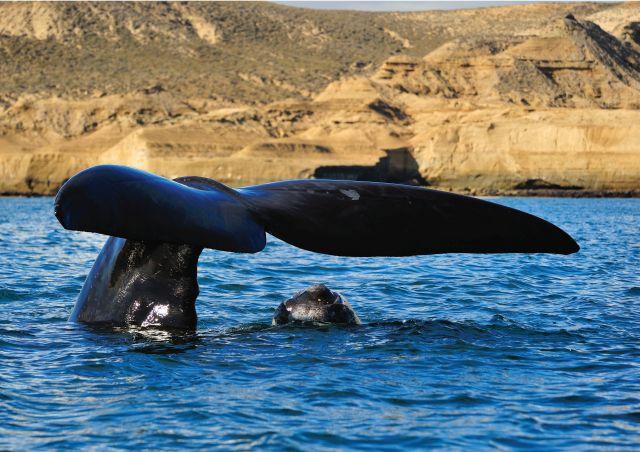 fauna marina argentina