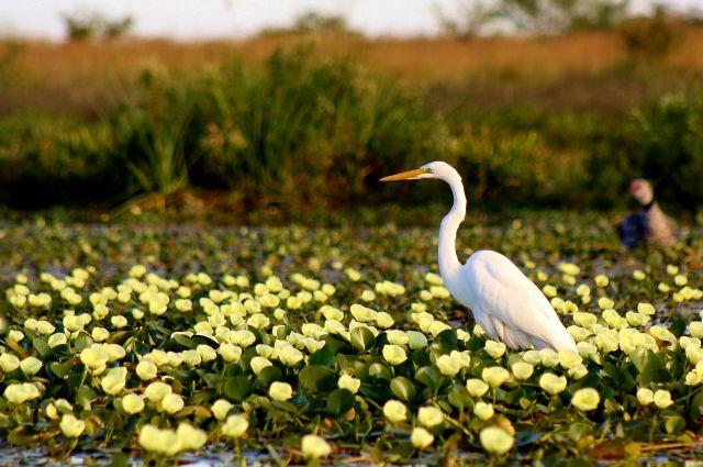 natura e fauna