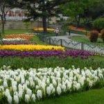 Festival Tulipani Istanbul 2018 turchia parchi fioriti