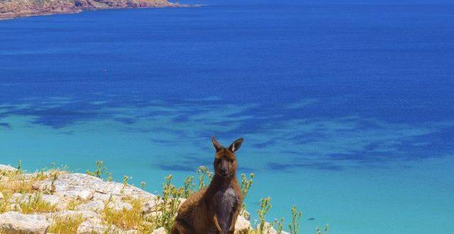 Canguri Kangaroo Island spiagge