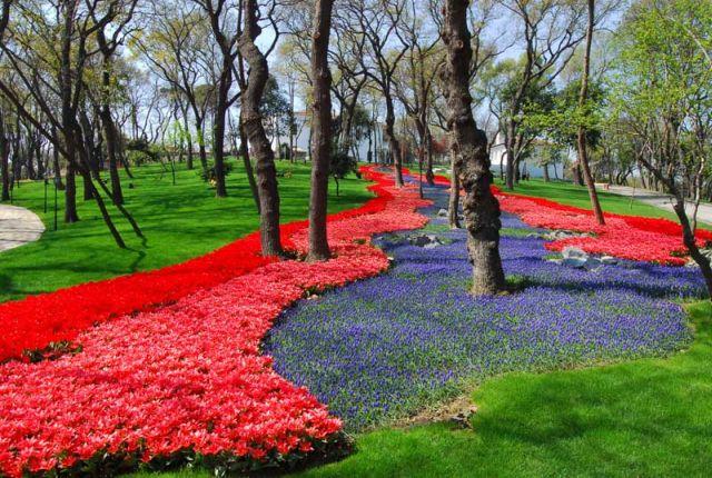 fioritura tulipani in turchia 2018