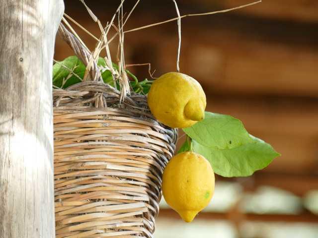Sal De Riso Costa D'Amalfi limoneto